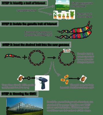 How to make a GMO plant figure