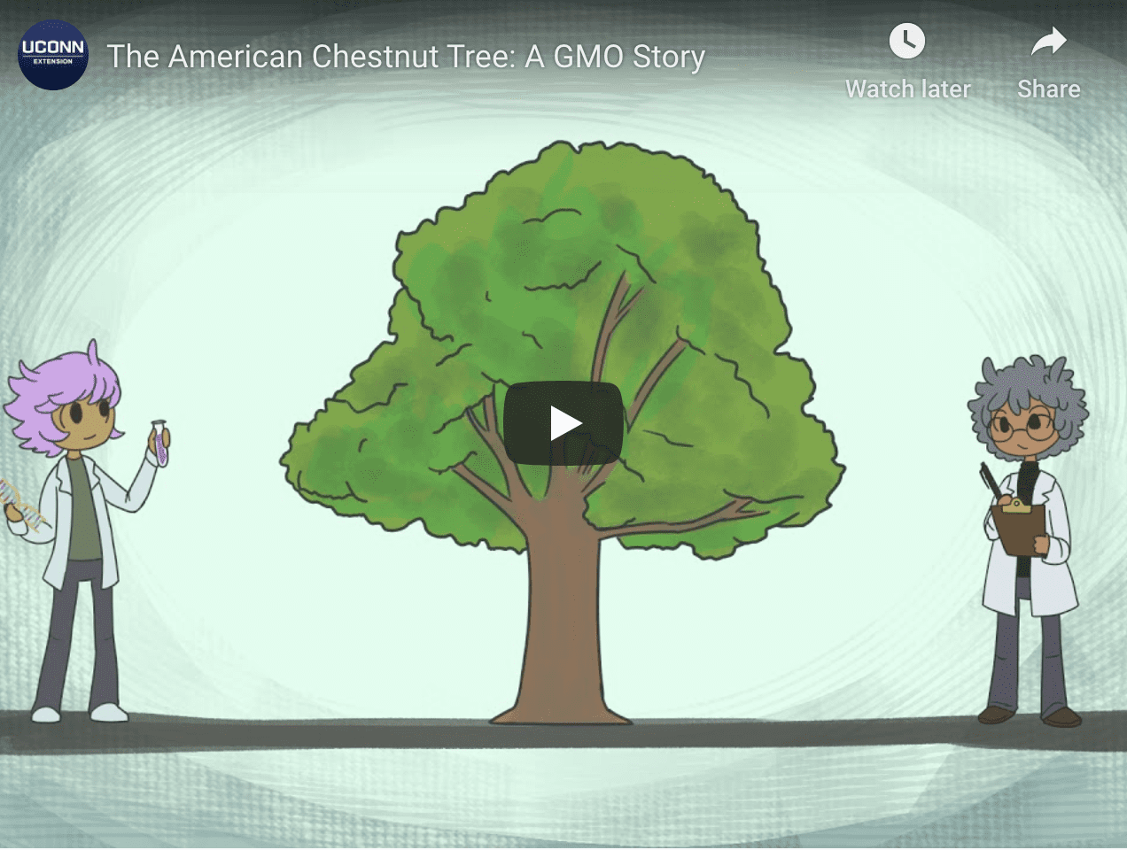 American Chestnut Tree animation opening video photo with tree and two people