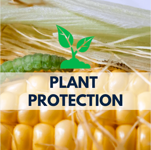 corn with a green worm, plant icon and navy blue text
